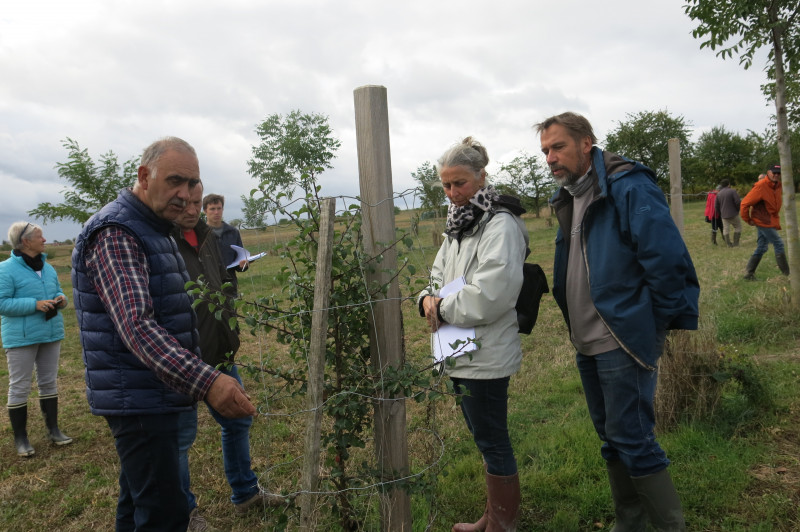 Agroforesterie-Knoersheim-IMG_5017.JPG