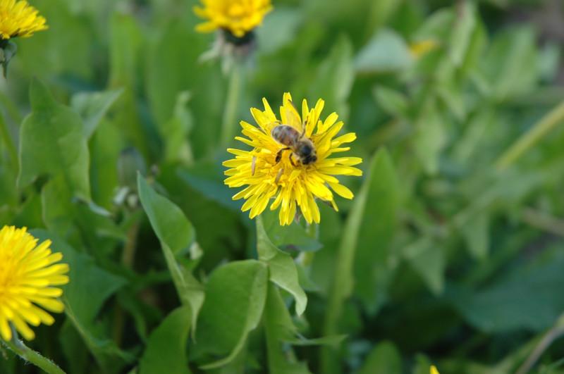 abeilles 3.JPG