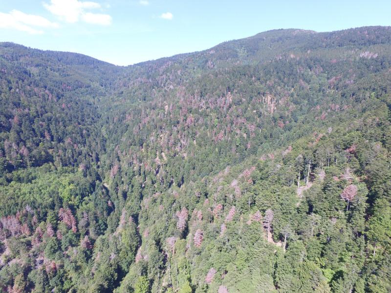 Drone Forêt rouge Masevaux Doller 030919-7.JPG