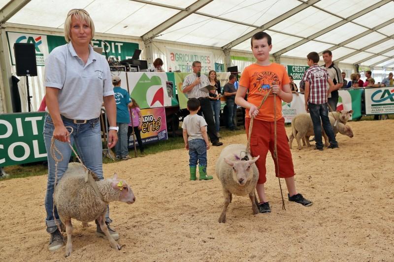 Festival de l'élevage - Ovins - Présentation.jpg