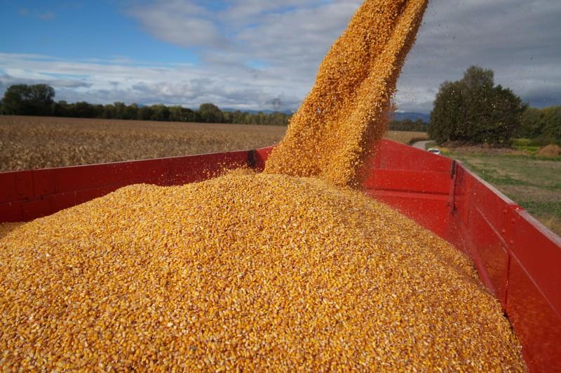 Récolte Maïs grains 14et15101641.jpg