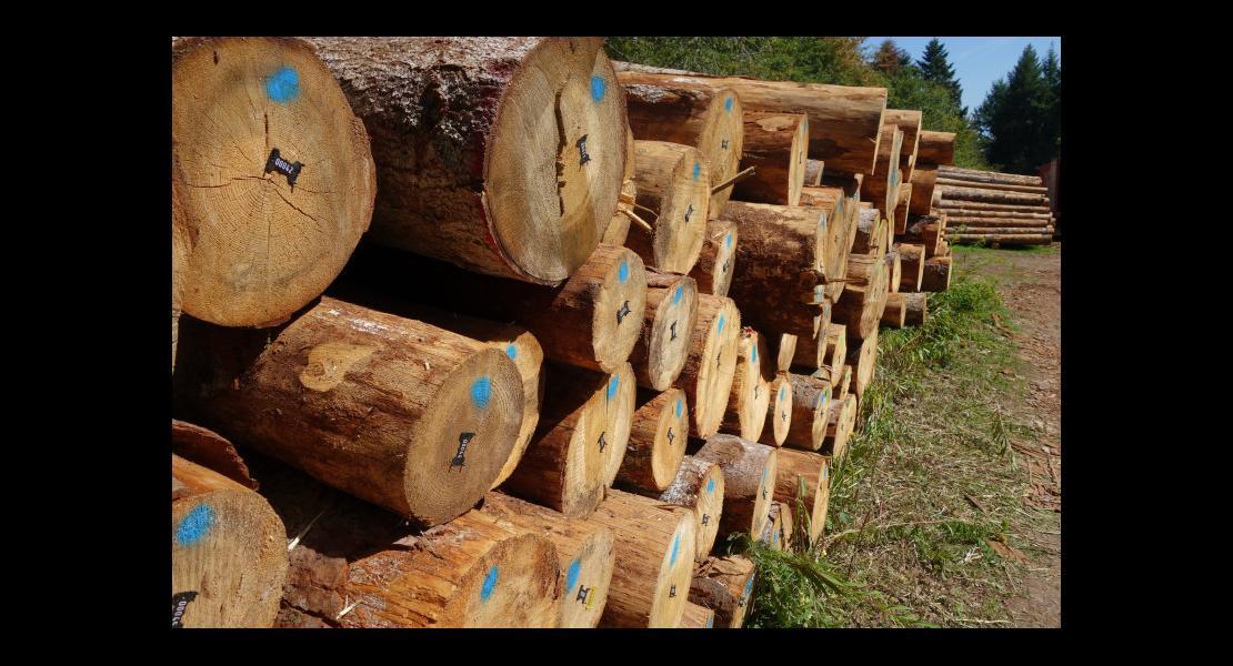 Forêt rouge vallée de la Doller 030919-3.JPG