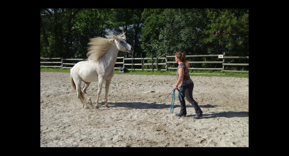 Kitty Lienhard Chuchotteuse chevaux 300620-3.JPG
