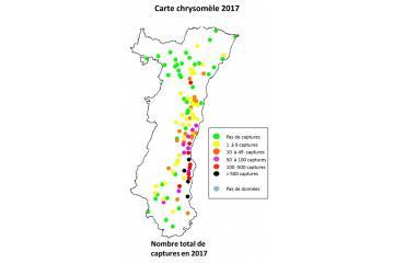 Carte chrysomèle 2017.jpg