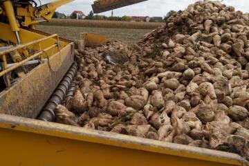 Récolte betteraves sucrières-50.jpg