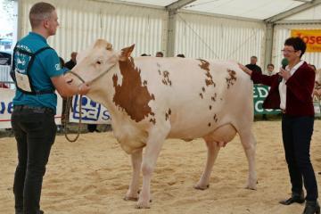 Festival de l'élevage - Concours Simmental - 07 -