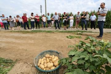 Lancement Pomme de terre - 02.jpg