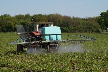 Préparatifs avant récolte fraises DessDSC02549.JPG