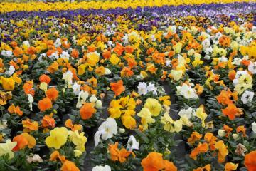 AG des Horticulteurs - Serre_2.jpg