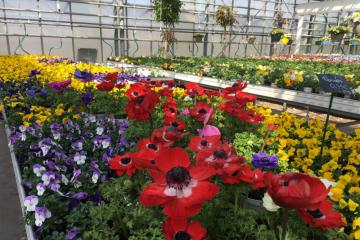 Horticulture-IMG_2925.JPG