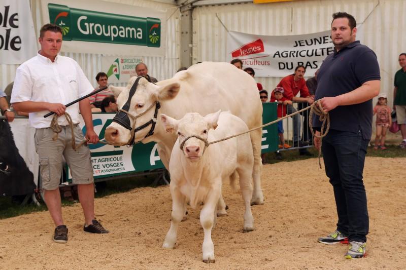 Festival de l'élevage - Présentations - Charolaise